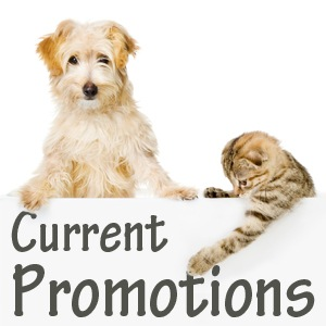 Current Promotions at SVASC click here