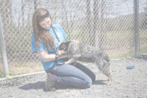 Moriah Good Employee of SVASC Shenandoah Valley Animal Services