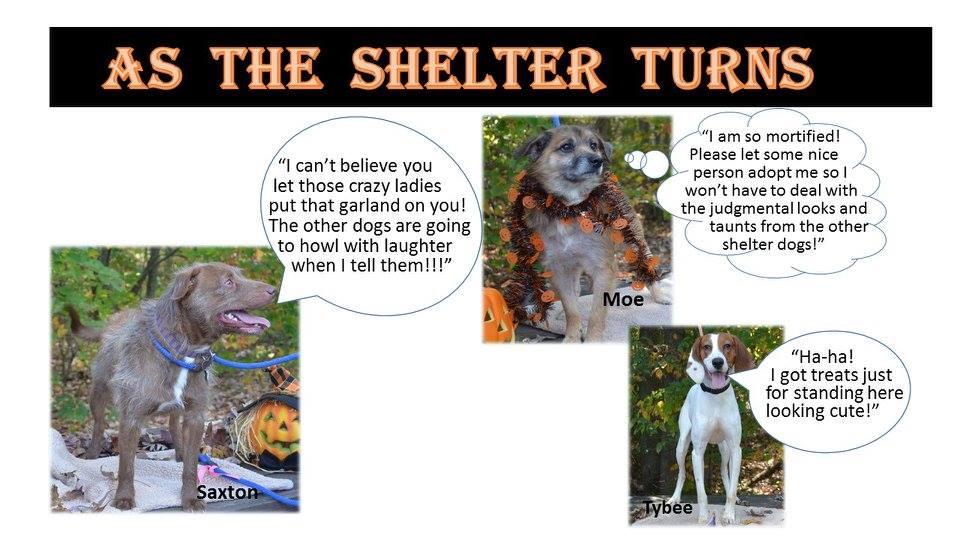 Happy Howloween From Svasc Shenandoah Valley Animal Services Center