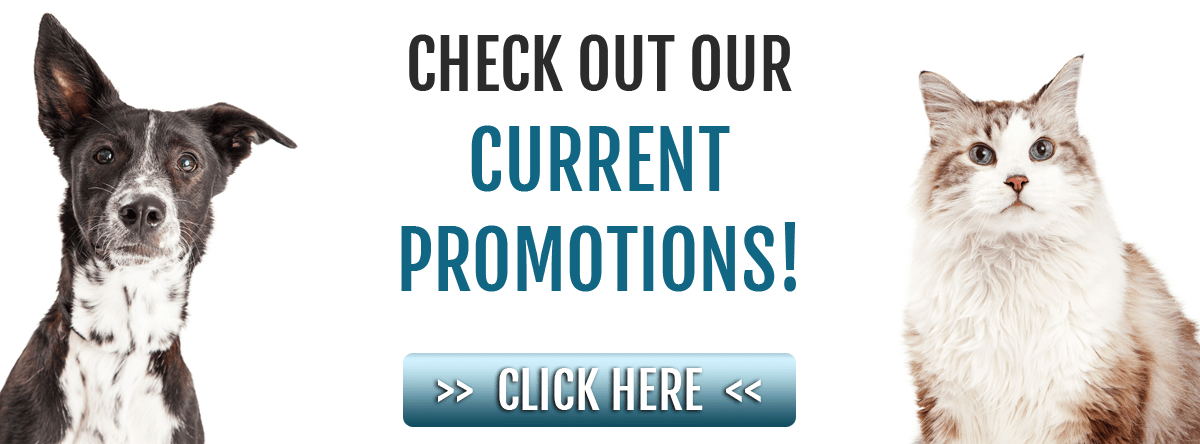 Check out our current promotions