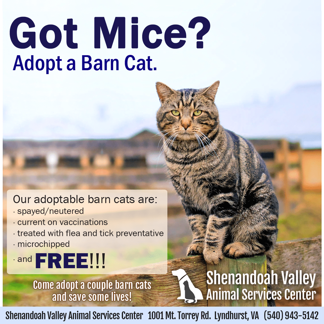 Barn Cats are free and available now!