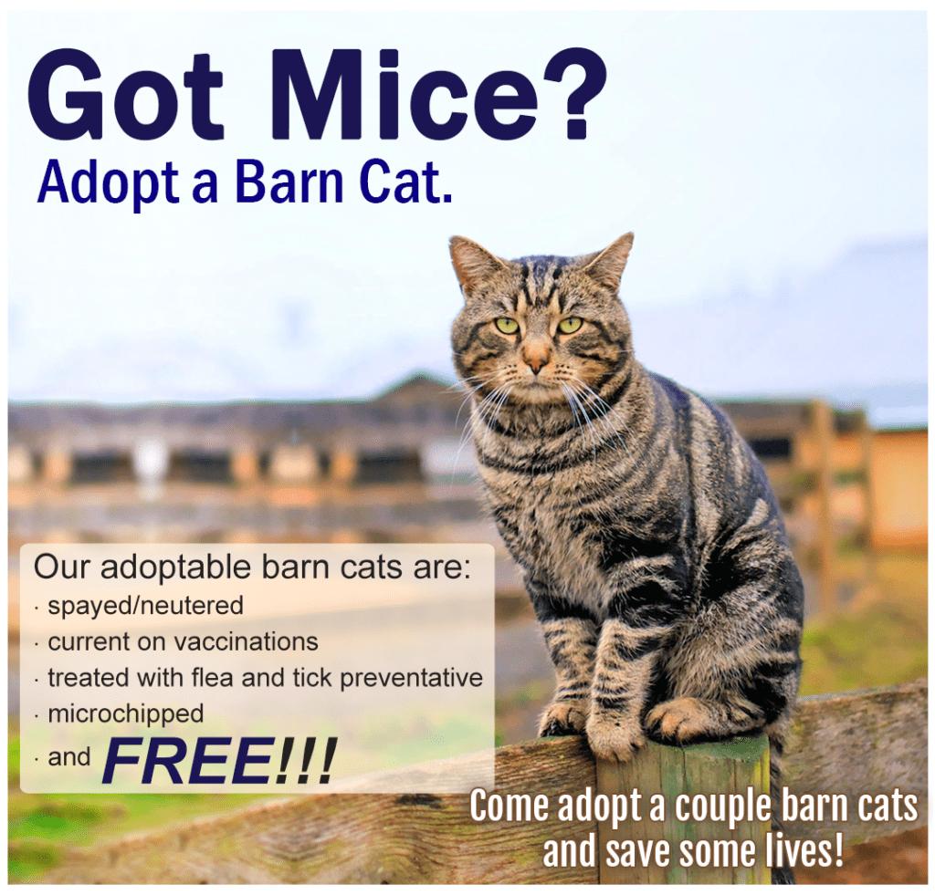 Barn_Cats_Promo